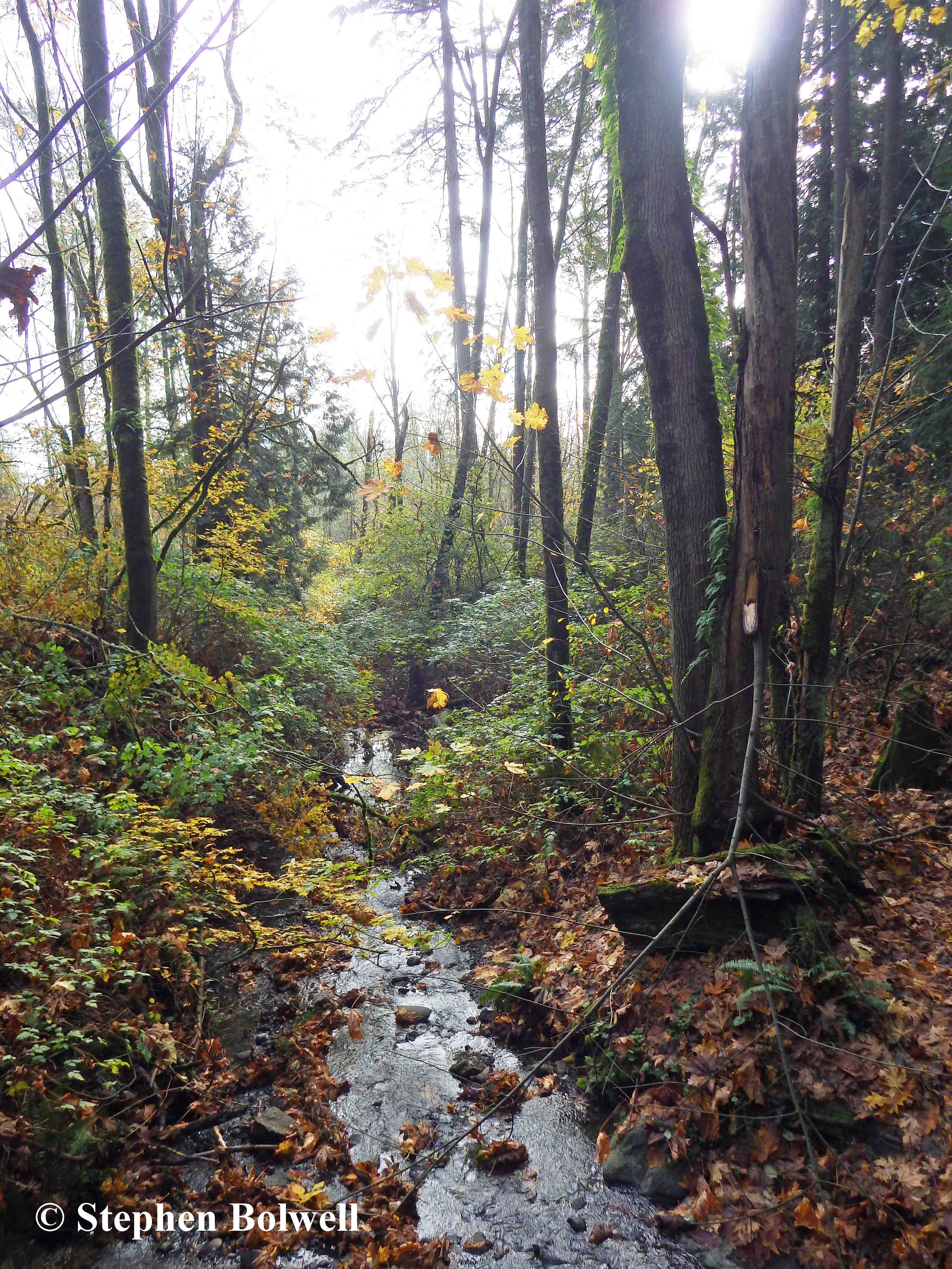 Surrey Fleetwood Park's woodland habitat is a little gem amongst an urban sprawl.