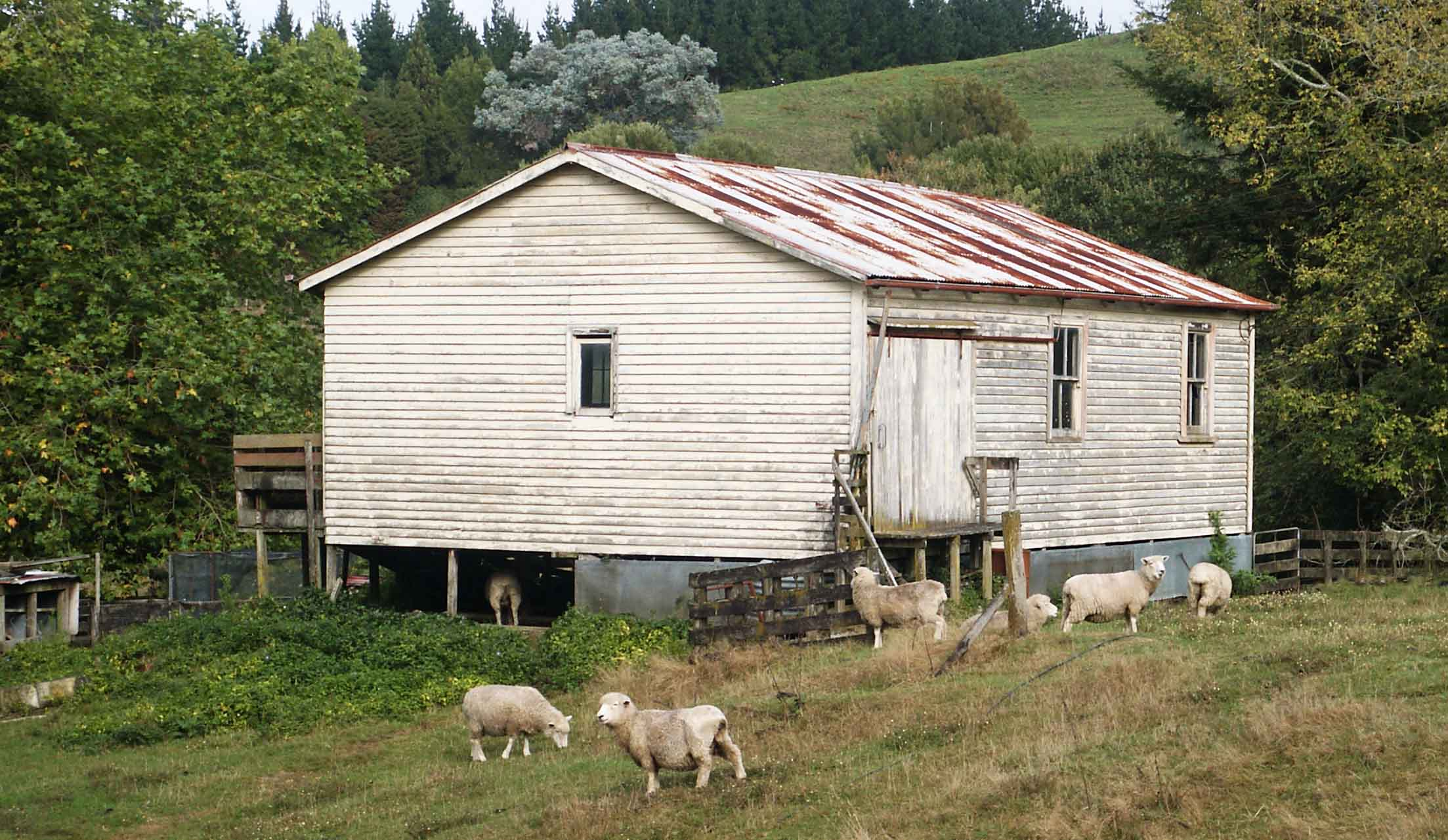 This is a classic New Zealand image, but things are changing. The old woodshed near to our house was demolished shortly after this picture was taken.