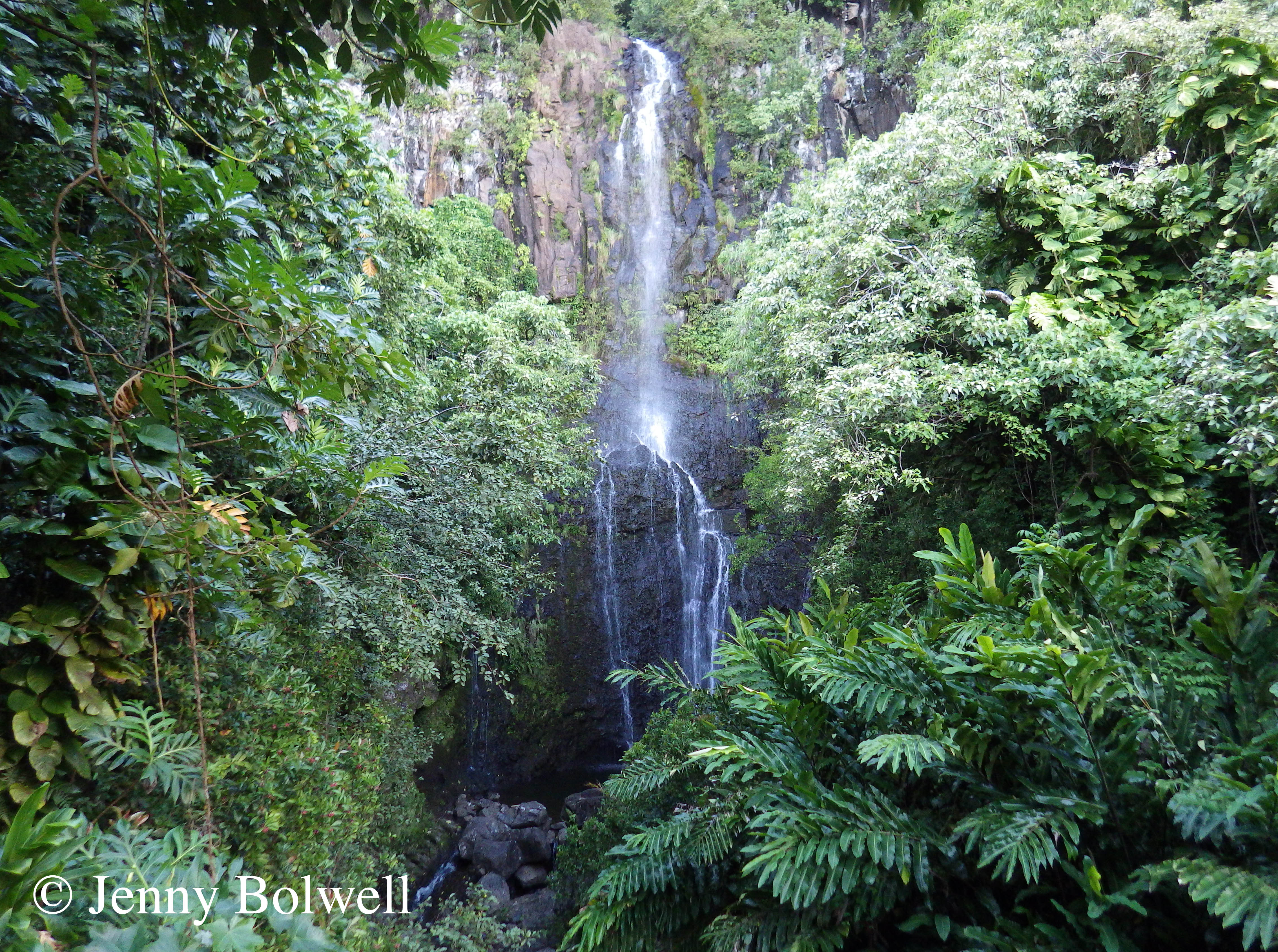 The real Hawaii - the exceptional beauty of waterfalls and forests.
