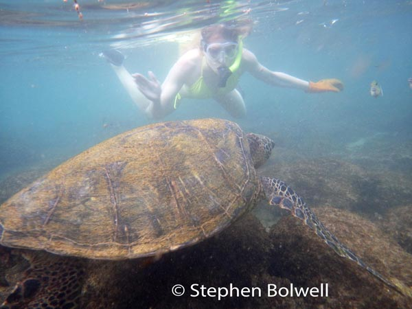 Wide angle lenses are frequently used to make foreground animals look bigger in comparison with a person in the background - nevertheless, this was a good sized turtle.