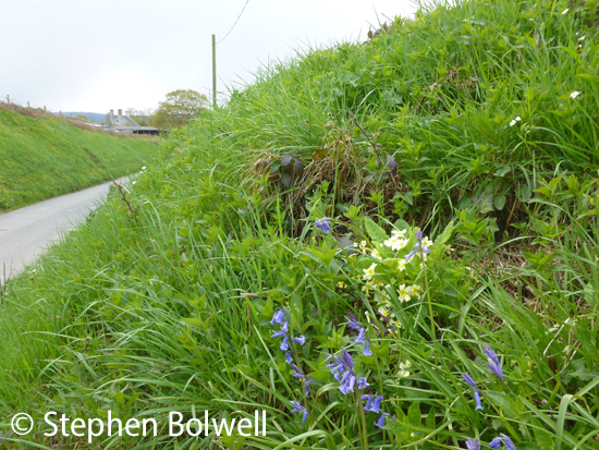 Letting the verges go in spring makes a huge difference to the conservation of nature.