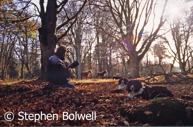 I have no problem with dog owners on the Forest, I owned dogs myself and they often accompanied me... when I wasn't filming deer!