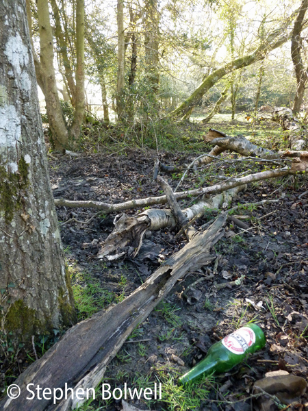 A certain percentage of the population will always be morons - and when visitor numbers goes up inevitably the litter count increases. In this case at least the discard bottle is green, so should this be a little less disturbed - I don't think so.