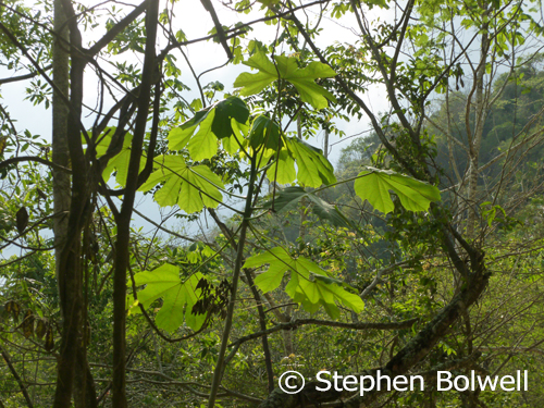 After rain, the varied greens of the forest are often intensified.
