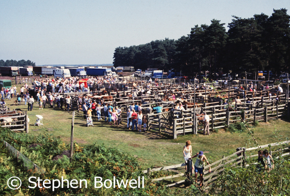 Commoners come together at Beaulieu Road Station to sell their ponies. This picture taken some time in the 1990s.