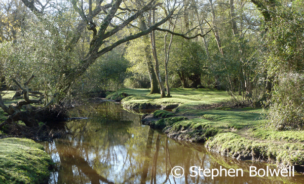 Many New Forest streams are very beautiful, but their banks are often barren and grazed completely free of undergrowth - in the past this certainly wasn't the case.