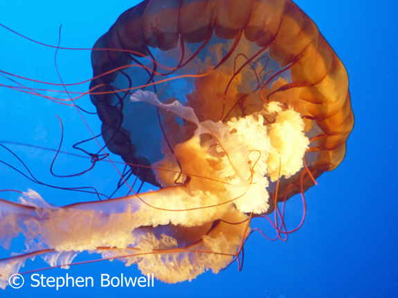 Animals with neural nets usually have radial symetry - this can be clearly seen by looking up into a jellyfish where several similar parts of the animal are arranged around a central axis.