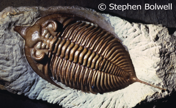 Trilobites were a very successful group of arthropods. They disappeared from Earth during one of the great mass extinctions of species 250 million years ago at the end of the Permain.