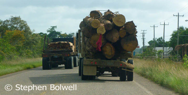 When I see logs moving along a road in the tropics I check their size, imagine them still standing quietly in the forest and then wonder if they have been legally logged - if they are it doesn't make me feel any better - I just find it depressing.