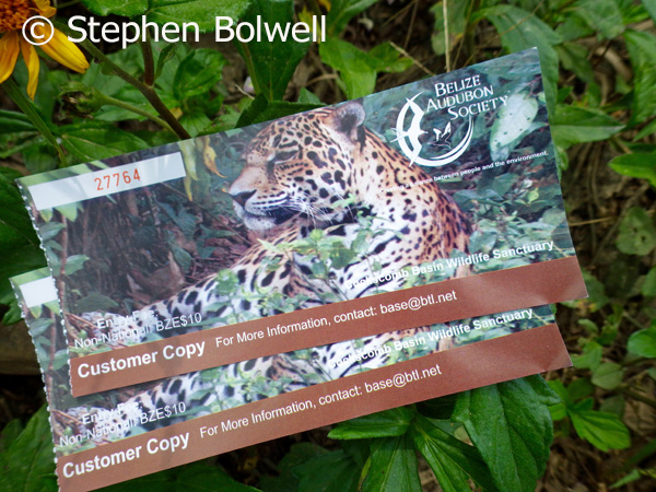 The best chance of getting a shot of a jaguar is to throw your entrance tickets onto the ground and go for the shot. Pick them up though, because these are the best park entry tickets you will ever come across.
