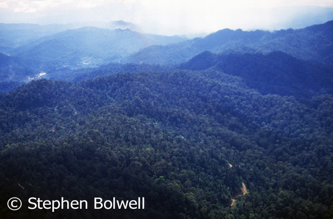 Much of the Malaysian rainforest I flew over in 1983 looked like this. A couple of years later some areas on the same route were criss crossed with logging roads and the trees were beginning to disappear.
