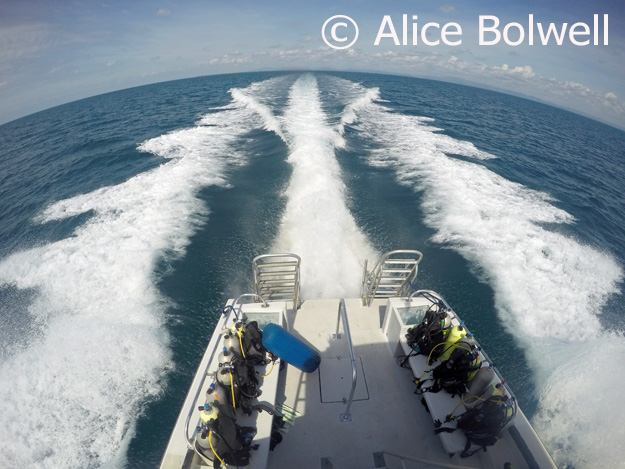 Alice gets an interesting perspective on our journey out to sea.