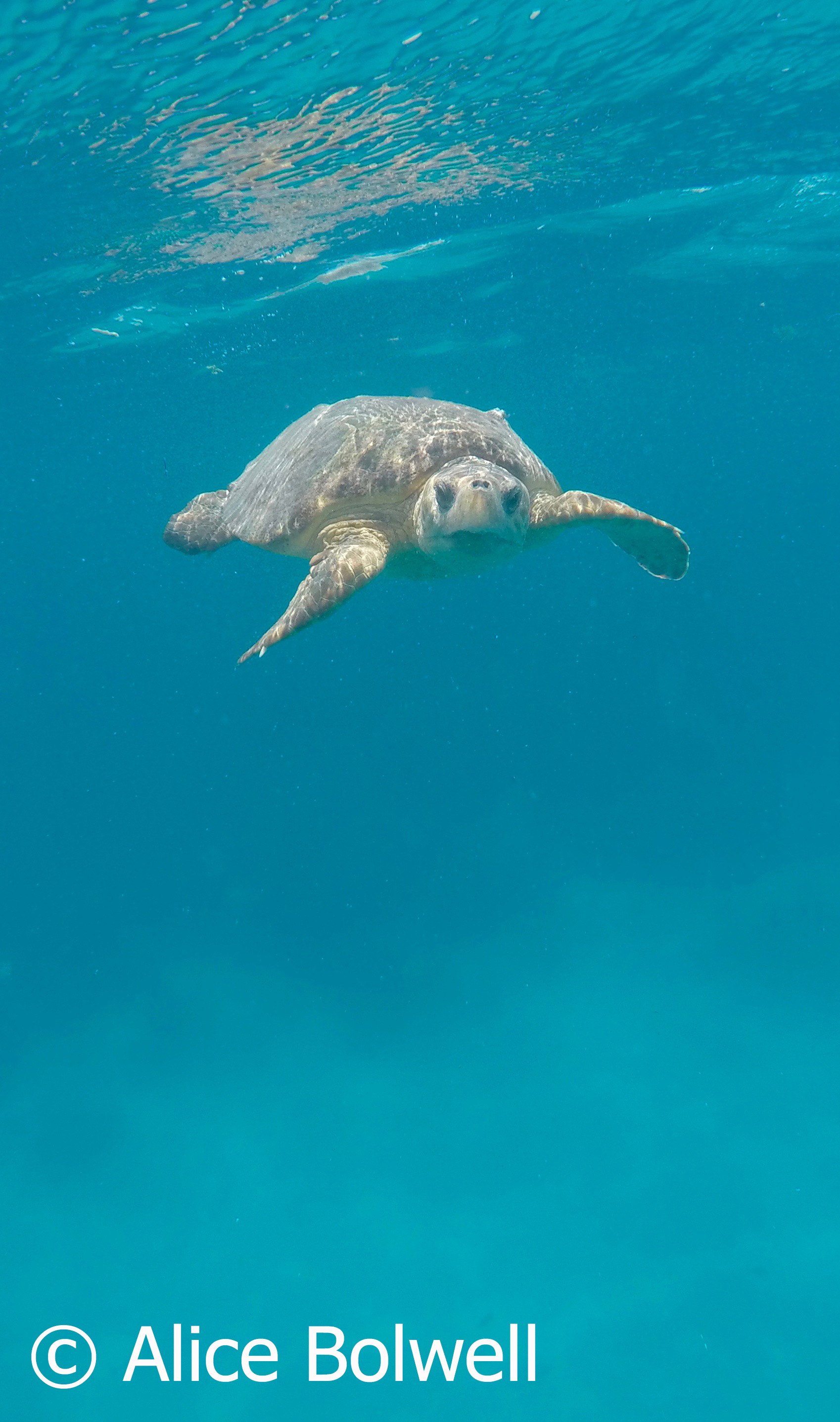 Alice saw and photographed a loggerhead turtle - so the dive wasn't a complete waste of time.