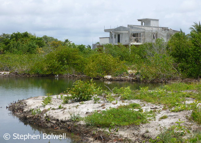 Coastal development is closely tied to mangrove loss