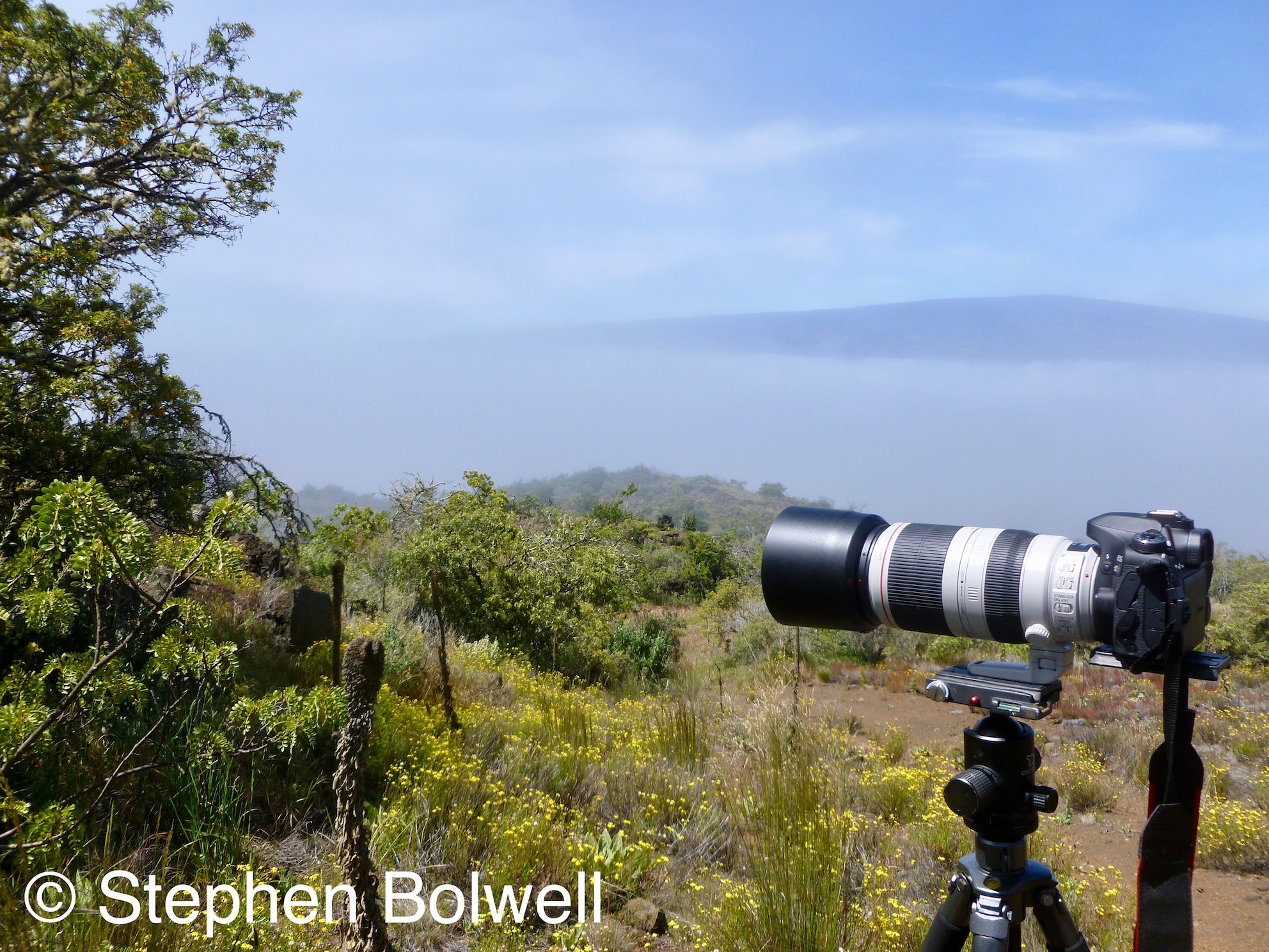 Standing just above the cloud line on Mauna Kea just before the tree line runs out into volcanic ash at about 9,000 ft, is possible to look across the saddle to Mauna Loa, here just peaking above the clouds.