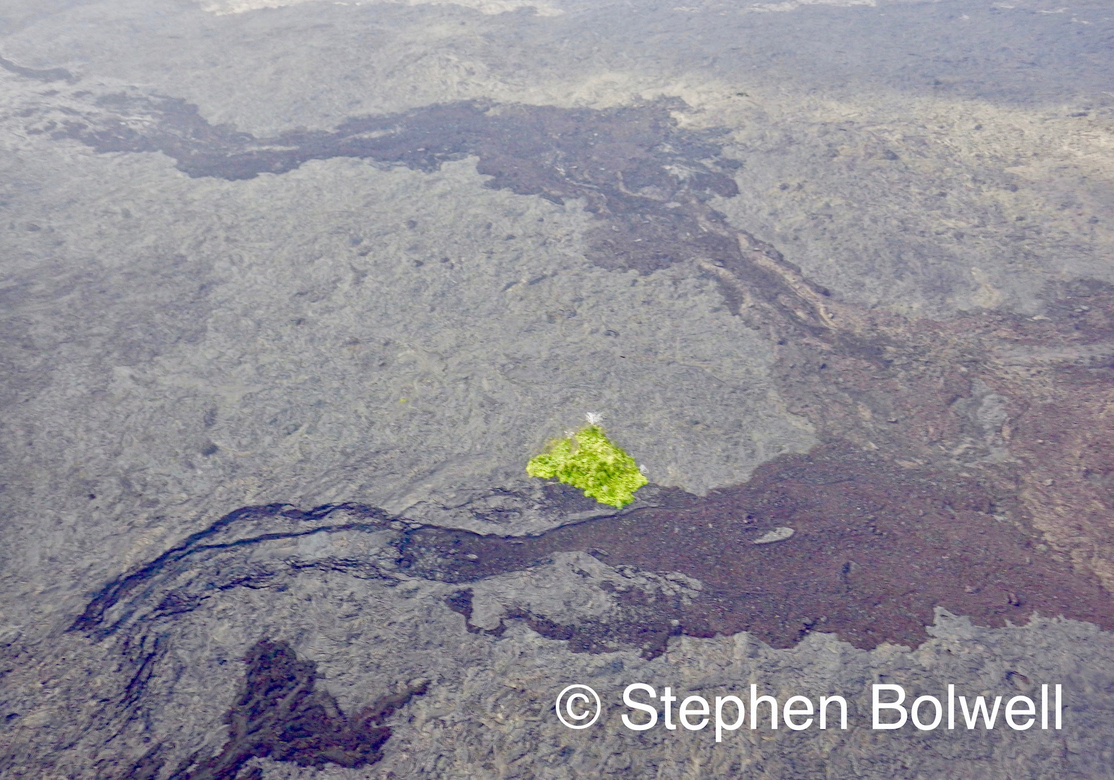Like water lava flows to the lowest point and high ground often preserves natural areas and if they are large enough to remain viable, will retain species to eventually recolonise the area.